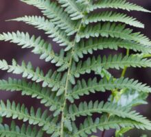 green fern in the forest Sticker