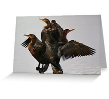 Beautiful Cormorants Greeting Card