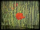 Poppy Love by Denise Abé