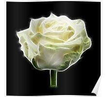 Roses, Roses™-Wedding White Poster