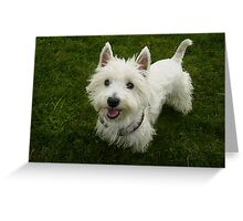 Cool West Highland Terrier Greeting Card
