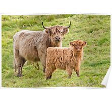 Highland Cows Poster