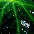 Green Veins by David  Guidas