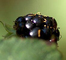 Blackberry by Wealie
