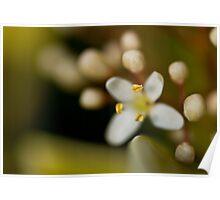 Blossom Budding Poster