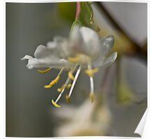 Blossom up close Poster