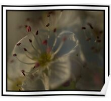 Blossoming Poster