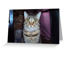 Sweety The Cat-1 Greeting Card