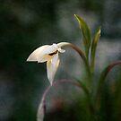Sun-lit Flower by Lynn Starner