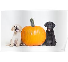 Lab Puppies Next To Pumpkin - Animal Rescue Portraits Poster