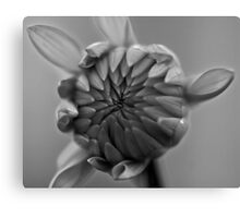 Dahlia Bloom Canvas Print