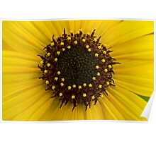 Southern Idaho Sunflower Poster