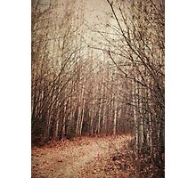 il sentiero Photographic Print