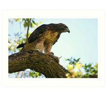 Hawk and Prey Art Print