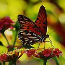 Monarch by Barbara  Brown