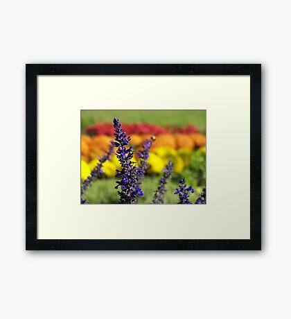 Rainbow Gardens Framed Print
