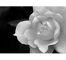 The Exquisiteness Of A Rose  Photographic Print