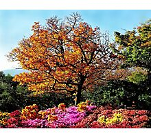 The paints of fall Photographic Print