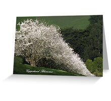 Gippsland Blossom Trees Greeting Card