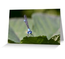 Damselfly Looks Your Way Greeting Card