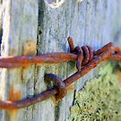 Barbed wire by Nigel Butfield