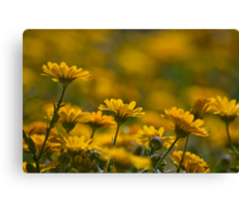 Bed Of Yellow Canvas Print