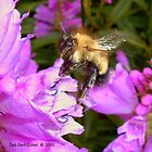 Obedient Bee by Deb  Badt-Covell
