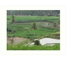 Indonesian Farmland Art Print