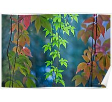 Living curtain Poster