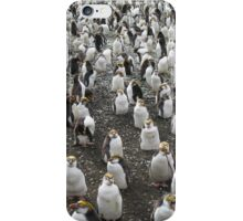Cute Royal Penguin