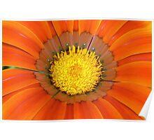 Orange Petals Poster