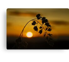 Harvest Sun Canvas Print