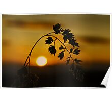 Harvest Sun Poster