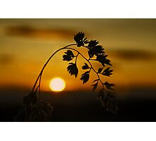 Harvest Sun Photographic Print
