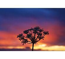 Wildflower Night Photographic Print