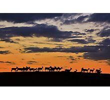 Deer at Dusk Photographic Print