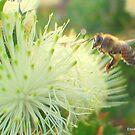 Busy bee by Greyman