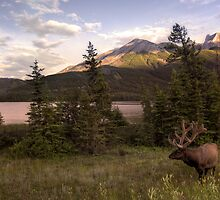 Wildlife in Canada by Thomas Plessis
