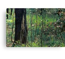 Patch of wild flowers in the forest Canvas Print