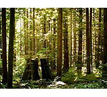 Golden Ears Provincial Park Photographic Print