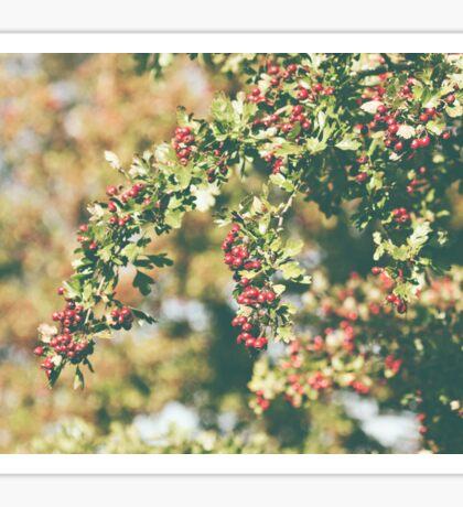 Red Berry Branch Sticker