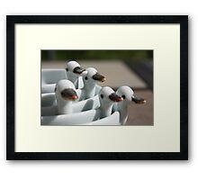 Ducks in a row ..... Framed Print