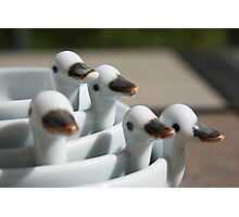 Ducks in a row ..... Photographic Print