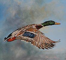 Mallard in Flight  by David McEwen