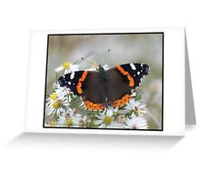 Red Admiral... Greeting Card