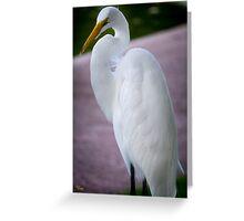 Egret Profile Greeting Card