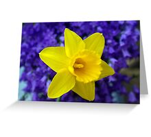 Easter Daffodil Greeting Card