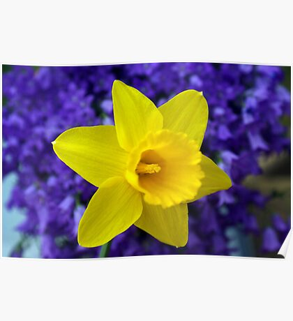 Easter Daffodil Poster