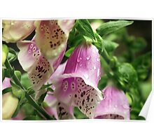 Foxgloves in the rain. Poster