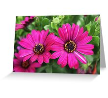 Twin Pink Daisies Greeting Card